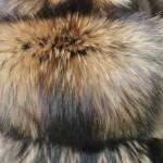 Енотовидная собака — Ателье по коже
