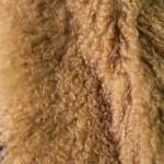 Тибетская лама Камель — Ателье по коже
